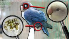Signs You Have a SICK BIRD!!! | Vet Series | Feat. Matt Gosbell - YouTube Bird Toys, Cat Toys, Sick, Youtube, Youtubers, Youtube Movies