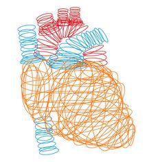 """Anatomical Heart"""" by Media Profunda"""
