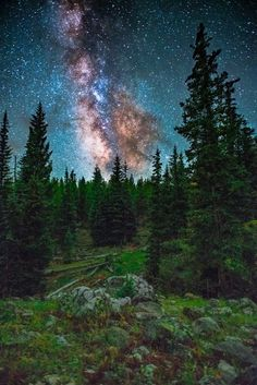 Milky Way Galaxy hovering over dark timber on a mountainside in Colorado.