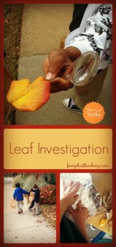 Fall Leaf Investigation l Fairy Dust Teaching Leaf Projects, Fall Projects, School Projects, Fall Preschool, Kindergarten Science, Teaching Science, Small Group Activities, Preschool Activities, Fairy Dust Teaching