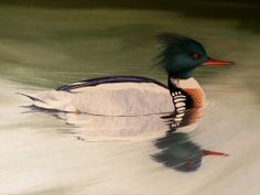 Oil PaintingOriginalRedbreasted Merganser by KickingBear on Etsy, $425.00
