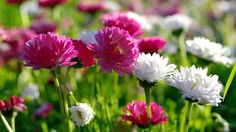 Understanding The Exciting #World Of #Flowers And Their #Meanings #Germany