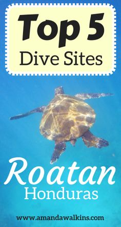 The best dive sites in Roatan as selected by industry pros