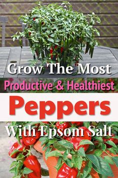 Use Epsom salt for Peppers to grow tastiest, most productive and disease-free pepper and chili plants in containers and ground. Easy Garden, Herb Garden, Vegetable Garden, Garden Art, Lawn And Garden, Fruit Garden, Edible Garden, Growing Peppers, Garden Organization