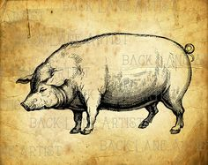 Pig Clipart Illustration Instant Download PNG by BackLaneArtist