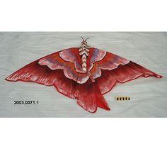 Cerf-volant de l'Indonésie - fait de bois et peut-être de soie, papillon nocturne. #DeLaCollection du @MuseeAvEspace