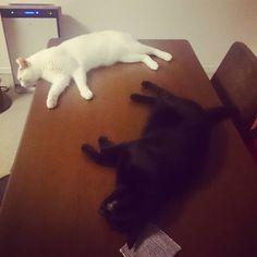 黒猫の画像集☆だれーん。黒猫さんと白猫さん。