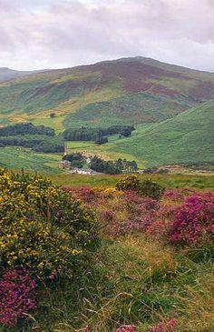 Wicklow Mountains,Ireland #IrelandLandscape