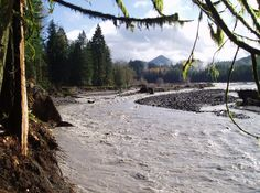 1000 images about mysterious creatures on pinterest the for Nisqually river fishing report