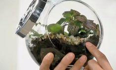 Giardino in bottiglia fai da te, come creare un giardino piccolissimo! | I sempreverdi