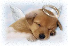 I believe in a pets heaven