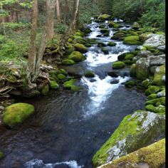 Great Smoky Mountain National Park, Tennessee. April 1, 2012.