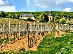 History and wine in Rheingau, Germany - Schloss Vollrads.