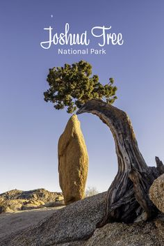 Joshua Tree National Park is a beautiful in Southern California. So photogenic! Plan a trip soon!