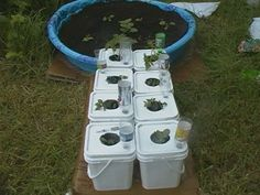 Delightful Robs World: Mr. Bigglesworthu0027s Kitty Litter Bucket Garden Bed