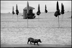© Elliott Erwitt/Magnum Photos // Deauville. 1991.