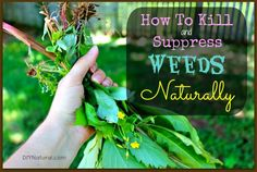 How to kill and suppress weeds naturally. Important stuff for the organic gardener!