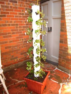 """4"""" PVC pipe planter. Hopefully these impatiens will fill in and make a flowering pole."""