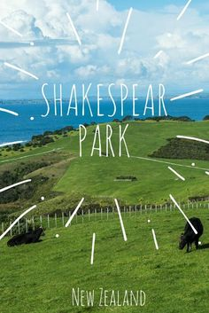 Rolling hills of Shakespear Park, Auckland New Zealand. One of many hiking options in a park teeming with farm animals and wildlife.