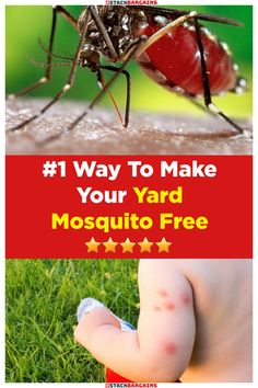 Eliminate Mosquitoes Fast Diy Mosquito Repellent, Mosquito Trap, Fly Repellant, Bottle Torch, Lake Dock, Diy Home Cleaning, Natural Health Remedies, Garden Pests, Prayers