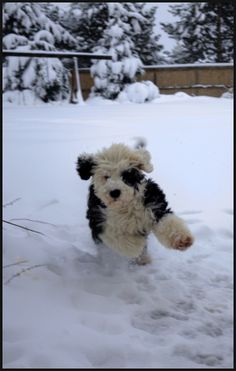 Yay! It's a #Snow Day! We want to play with this #puppy in the snow!