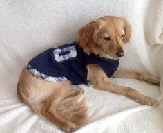 Camiseta para perro en algodón azul marino con tu por MuckaPets