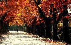 Fall in Penafiel