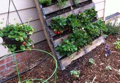 Jak zrobić planter na truskawki z palety?