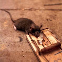 Veneno casero para ratas yahoo dating