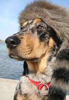 Doggy Crockett.