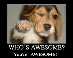 Image result for you are awesome funny