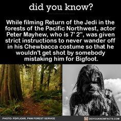 Did you know? While filming Return of the Jedi in the forests of the Pacific Northwest, actor Peter Mayhew, who is was given strict instructions to never wander off in his Chewbacca costume so that he wouldn't get shot by somebody ici him for Bigfoo Creepy Facts, Wtf Fun Facts, Random Facts, Funny Facts, Dumb Facts, Random Stuff, Funny Stuff, Strange Facts, True Facts