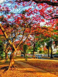 Asa sul, Brasília, DF, Brasil.