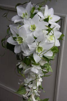 Eucharis grandiflora/Amazon liliy,Stephanotis floribunda/Madagascar jasmine,Dendrobium-phalaenopsis,Stemona japonica