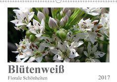Blütenweiß - Florale Schönheiten - CALVENDO