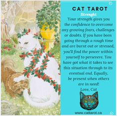 Monthly readings on my YouTube channel: www.youtube.com/c/cattarot Book your reading: www.cattarot.ca Love, Cat #tarot #tarotcards What It Takes, Tarot Cards, Channel, Challenges, Reading, Cats, Book, Youtube, Tarot Card Decks