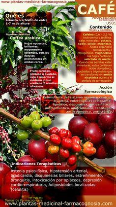 Infografía. Resumen de las características generales de la planta del Café. Propiedades, beneficios y usos medicinales más comunes del café