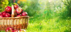 Produsele noastre | Fruttissima - Livrari de fructe proaspete|Fructe la birou Apple Fruit, Apple Juice, Apple Cider, Apple Baskets, Toxic Foods, Cancer Fighting Foods, Jewelry Candles, Fruit Of The Spirit, Eat Fruit