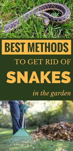 Best methods to get rid of snakes in the garden. Best methods to get rid of snakes in the garden. Garden Snakes, Slugs In Garden, Garden Bugs, Garden Insects, Garden Pests, Lawn And Garden, Herb Garden, Garden Tools, Organic Gardening