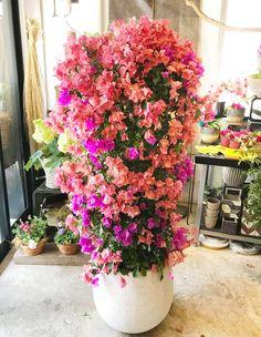 僕はギンコのお花が好きなんだ!