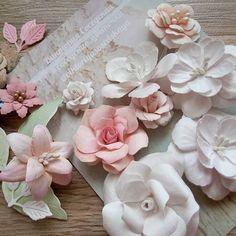 Вот. Теперь решила вопрос с упаковкой 😉😄 Красота!!!! #соседские_цветочки #соседскиецветочки  #виктория_соседская