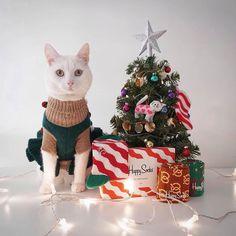 Happy Socks - Funky Colorful Socks For Men, Women & Kids. Crazy Cat Lady, Crazy Cats, Zappa, Merry Christmas, Christmas Ornaments, Colorful Socks, Happy Socks, Happy Animals, Happy Holidays