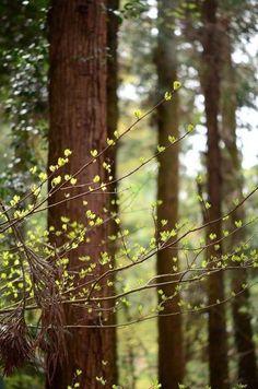 Naturbilder: schöne #Naturbilder #Natur #Baum www.der-sinn-des-lebens-sei-gluecklich.de