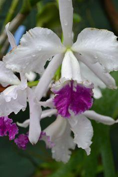 Orchids  Werte sichern für die nächsten Generationen!  http://spari.guenther.simplymaxx.info/     http://www.contactcreators.com/?welcome=w2w203u2