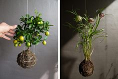 string gardens made using three-dimensional crochet filled with plaster, soil, moss, and grass. definitely a DIY project for the future! String Garden, Indoor Garden, Indoor Plants, Outdoor Gardens, Hanging Gardens, Moss Garden, Garden Projects, Garden Ideas, Diy Projects
