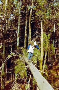 Waldspiele und Walderlebnisse