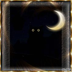 Lovely Good Night, Good Night Flowers, Good Night Gif, Good Night Sweet Dreams, Good Night Image, Good Night Quotes, Good Night Greetings, Good Night Messages, Good Night Wishes