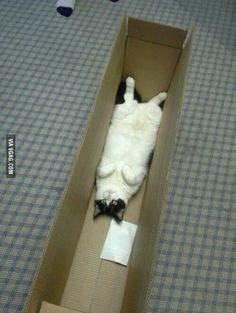 """lol, nice original caption: Cats In Boxes - Funny Cat Photos - Good Housekeeping - """"Draw me like one of your French girls, Jack. Funny Cat Photos, Funny Cats, Funny Animals, Funny Pictures, Cute Animals, Funny Horses, Crazy Cat Lady, Crazy Cats, I Love Cats"""
