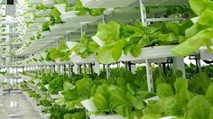 Vertical farming: A hot new area for investors—commentary