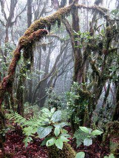 "From ""Tenerife hiking trails"" story by Lilliam Menendez  on Storify — http://storify.com/LilliamMdez/tenerife-hiking-trails"